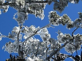 雪蓋復興尖、冰封塔曼山:IMG_2530.jpg