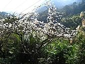 佛山賞李花:IMG_6439.jpg