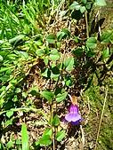 獅公髻尾山:IMG_8065.jpg