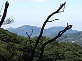 熊空休閒農場登熊空山、竹坑山:IMG_1755.jpg
