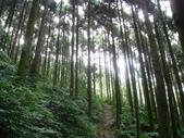 桂山路上大桶山:IMG_1803.jpg