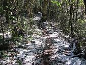 雪蓋復興尖、冰封塔曼山:IMG_2438.jpg