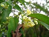 南勢角山的花草:IMG_6482.jpg