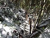 雪蓋復興尖、冰封塔曼山:IMG_2462.jpg