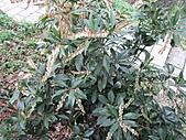 台灣馬醉木、小錦蘭、石月、土肉桂、烏心石:IMG_2891.jpg