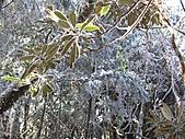 雪蓋復興尖、冰封塔曼山:IMG_2505.jpg