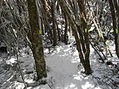 雪蓋復興尖、冰封塔曼山:IMG_2531.jpg