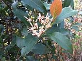 植物隨拍:IMG_4438.jpg