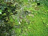 福山植物園:IMG_6414.jpg