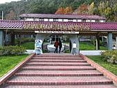 武陵楓正紅:IMG_1539.jpg