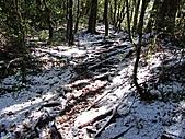 雪蓋復興尖、冰封塔曼山:IMG_2439.jpg