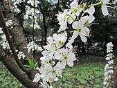 南勢角山的花草:IMG_2806.jpg