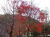 武陵楓正紅:IMG_1578.jpg
