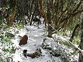 雪蓋復興尖、冰封塔曼山:IMG_2552.jpg