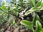 植物隨拍:IMG_4174.jpg