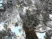 雪蓋復興尖、冰封塔曼山:IMG_2532.jpg