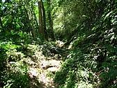 大溪金面山:IMG_7387.jpg