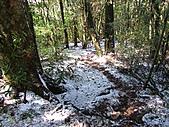 雪蓋復興尖、冰封塔曼山:IMG_2440.jpg