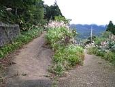 小烏來登赫威山、赫威前峰、木屋遺址、赫威神木群:IMG_5027.jpg