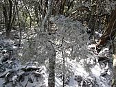 雪蓋復興尖、冰封塔曼山:IMG_2506.jpg