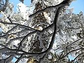 雪蓋復興尖、冰封塔曼山:IMG_2533.jpg