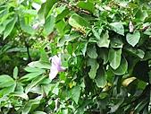植物隨拍:IMG_4166.jpg
