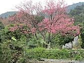 陽明山、竹子湖賞花行:IMG_3012.jpg