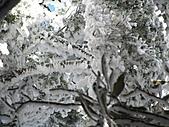 雪蓋復興尖、冰封塔曼山:IMG_2534.jpg