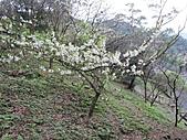 南勢角山的花草:IMG_2807.jpg