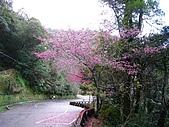 拉拉山遊樂區:IMG_1508.jpg