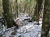 雪蓋復興尖、冰封塔曼山:IMG_2441.jpg