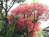 植物隨拍:IMG_3399.jpg