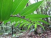 植物隨拍:IMG_3420.jpg