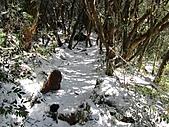 雪蓋復興尖、冰封塔曼山:IMG_2488.jpg