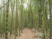 水社大山:IMG_2516.jpg