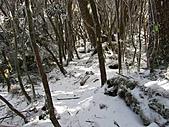 雪蓋復興尖、冰封塔曼山:IMG_2507.jpg