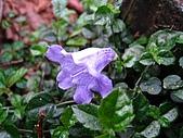 太平山四月植物篇:IMG_2888.jpg