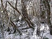 雪蓋復興尖、冰封塔曼山:IMG_2535.jpg