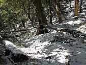 雪蓋復興尖、冰封塔曼山:IMG_2466.jpg
