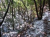 雪蓋復興尖、冰封塔曼山:IMG_2442.jpg