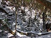 雪蓋復興尖、冰封塔曼山:IMG_2467.jpg