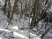 雪蓋復興尖、冰封塔曼山:IMG_2536.jpg