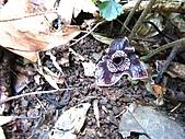 植物隨拍:IMG_3421.jpg