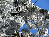 雪蓋復興尖、冰封塔曼山:IMG_2509.jpg