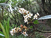 植物隨拍:IMG_3400.jpg