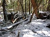 雪蓋復興尖、冰封塔曼山:IMG_2468.jpg