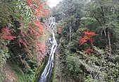 武陵楓正紅:IMG_1629.jpg