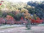 武陵楓正紅:IMG_1581.jpg