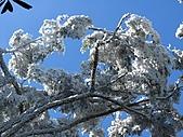 雪蓋復興尖、冰封塔曼山:IMG_2510.jpg