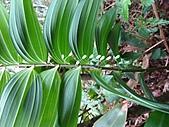 植物隨拍:IMG_3423.jpg